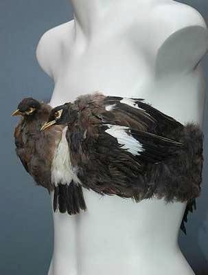 Biustonosz z ptaków